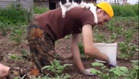 კატა პატრონს ბაღის საქმეში