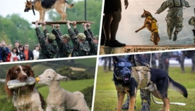 ძაღლები ადამიანების სამსახურში (+ფოტოები)