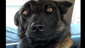 პატრონმა ძაღლს უთხრა, რომ მალე ძმა ეყოლება, ცხოველის რეაქცია საოცარია (სახალისო ვიდეო)