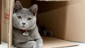 რატომ უყვართ კატებს ყუთები?