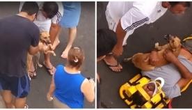 ერთგული ძაღლი ქუჩაში უგონოდ დავარდნილი პატრონის დაცვას ცდილობს (ემოციური ვიდეო)
