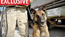 სირიაში სამხედრო ძაღლმა ბრიტანელი ჯარისკაცები ჯიჰადისტებისგან დაიცვა