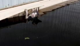 როგორ ეხმარებიან აშშ-ში ქარიშხლის დროს კომპანიონ ცხოველებს (ემოციური ფოტოები)