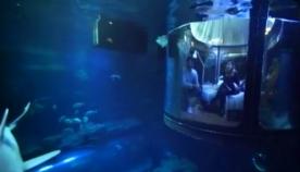 ლოგინში…. ზვიგენებთან ერთად! (+ვიდეო)