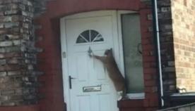 ყველაზე ზრდილობიანი კატა ინტერნეტ ჰიტად იქცა (სახალისო ვიდეო)