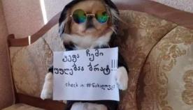 როგორ აპროტესტებენ საქართველოში მცხოვრები ძაღლები და მათი პატრონები