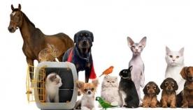 იცით, რომელი ცხოველები ჰყავთ ყველაზე ხშირად შინ ადამიანებს? - ნახეთ სტატისტიკა