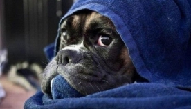 ცნობილი კომპანიები შინაური ცხოველის მოვლისთვის თანამშრომლებს 10-დღიან შვებულებას სთავაზობენ