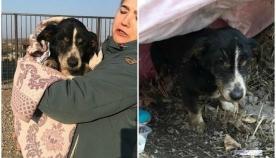 პატრონებს 18 წლის ძაღლი მკვდარი ეგონათ და დაასაფლავეს