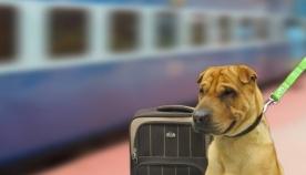 ცხოველების საქალაქთაშორისო რკინიგზით ტრანსპორტირების წესები საქართველოში