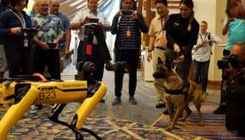 რობოძაღლმა Boston Dynamics-მა  გერმანულ ნაგაზთან ითამაშა (სახალისო ვიდეო)