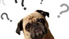 როგორ ფიქრობს ძაღლი