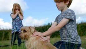 ბავშვები ვერ აცნობიერებენ შეშინებული ძაღლისგან საფრთხეს
