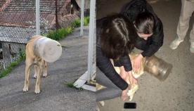 სიკეთე აერთიანებს! – თბილისში გადაარჩინეს ძაღლი, რომელმაც 8 დღე წყლისა და საკვების გარეშე გაძლო