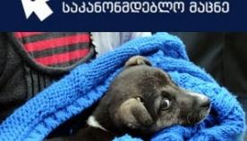 ქალაქ თბილისის მუნიციპალიტეტის ტერიტორიაზე ცხოველების ( ძაღლების, კატების) მოვლა-პატრონობისა და მათი პოპულაციების მართვის წესი
