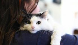 სპეციალისტებმა დაადგინეს სინამდვილეში, როგორი დამოკიდებულება აქვს კატას ადამიანის მიმართ