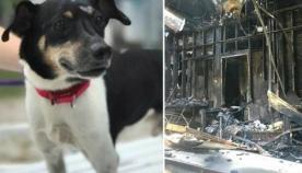 გმირმა ძაღლმა საკუთარი სიცოცხლის ფასად პატრონები ხანძრისგან გადაარჩინა