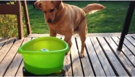 ახალი სათამაშოს დანახვისას, ძაღლი სიხარულისგან