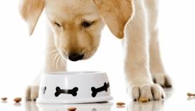 რომელი საკვებია რეკომენდირებული თქვენი ძაღლისთვის?