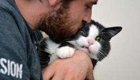 კატები, რომლებიც ვერ იტანენ ჩახუტებას (სახალისო ფოტოები)