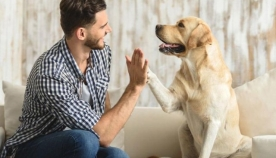 15 ძაღლი, რომლებიც გვაჩვენებენ, რა არის სიყვარული და მზრუნველობა