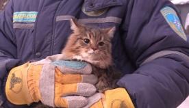 მაგნიტოგორსკში ჩამონგრეული სახლიდან 6 კატა  და ძაღლი გამოიყვანეს