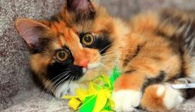 6 რამ, რაც რთულია გააკეთო თუ კატასთან ერთად ცხოვრობ