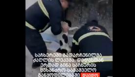 საჩხერეში მაშველებმა დედა ძაღლი ლეკვთან ერთად გადაარჩინეს და სახანძრო სამსახურის ეზოში სახლი დაუდგეს (ემოციური ვიდეო)