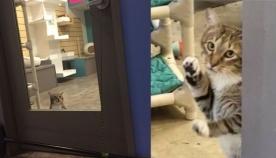 7 წლის კატამ კარის გაღება ისწავლა, რის შემდეგაც მეგობრებს თავშესაფრის გალიებიდან ათავისუფლებდა