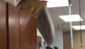 მოხერხებულმა კატამ საოცარი ნახტომი შეასრულა (სახალისო ვიდეო)