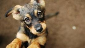 ძაღლებს შეუძლიათ ეპილეფსიური შეტევა ყნოსვით წინასწარ ამოიცნონ