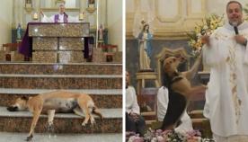 კათოლიკე მოძღვარმა ეკლესიაში მიუსაფარი ძაღლების თავშესაფარი მოაწყო
