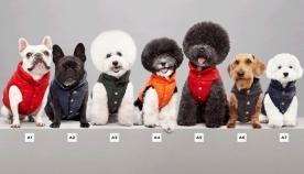 Moncler-მა ძაღლებისთვის ქურთუკების კოლექცია გამოუშვა (+ფოტო)