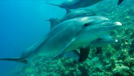 აშშ-ში მეცნიერები დელფინების მასიური სიკვდილიანობის სავარაუდო მიზეზებზე საუბრობენ