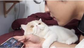განებივრებული კატა პატრონისგან ყურადღებას ითხოვს (სახალისო ვიდეო)