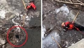 სანაპირო დაცვის თანამშრომელმა ლეკვის გადარჩენა ბოლო წამებში მოასწრო (ემოციური ვიდეო)