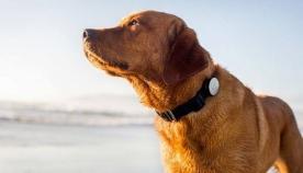 ჯეკა - ერთი საოცარი ძაღლი, რომელსაც არასოდეს დაივიწყებენ...