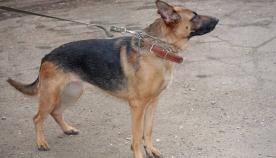 ძაღლზე თავდასხმამ 25 წლის წინანდელი დანაშაული გახსნა