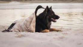იხვისა და გერმანული ნაგაზის საოცარი მეგობრობის ისტორია (ემოციური ფოტოები)