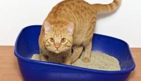 როგორ მივაჩვიოთ კატა ტუალეტს