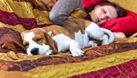 უნდა ეძინოს თუ არა თქვენს ოთხფეხა ბინადარს, თქვენს საწოლში?