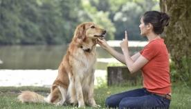ხნიერი ძაღლი ახალ ბრძანებებს ვერ სწავლობს: მითი თუ რეალობა?