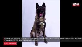 დონალდ ტრამპი იმ ძაღლის ფოტოს აქვეყნებს, რომელმაც აბუ ბაქრ ალ-ბაღდადის ლიკვიდაციაში მიიღო მონაწილეობა