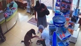 სათვალთვალო კამერამ გადაიღო ძაღლი, რომელიც აფთიაქში შევიდა და დახმარებას ითხოვდა (ემოციური ვიდეო)