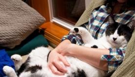 5 რჩევა, რომ თქვენი კატა მეგობრული გაიზარდოს