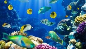 აკვარიუმის თევზები სიგარეტისთვის თავის დანებებაში დაგეხმარებიან