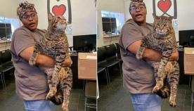 უზარმაზარი კატა სოციალურ ქსელებში ვარსკვლავი გახდა და არაერთი ადამიანის გული დაიპყრო (+ვიდეო)
