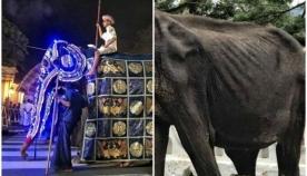 სპილოების მონაწილეობით