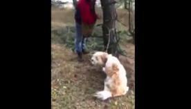 ქართველმა მონადირეებმა ტყეში მოკლე მავთულით ხეზე დაბმული ძაღლი იპოვეს  (ემოციური ვიდეო)