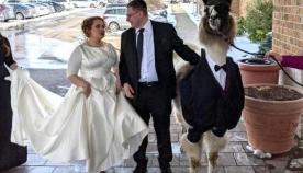 პატარძალი გაბრაზდა, როდესაც დაინახა, თუ